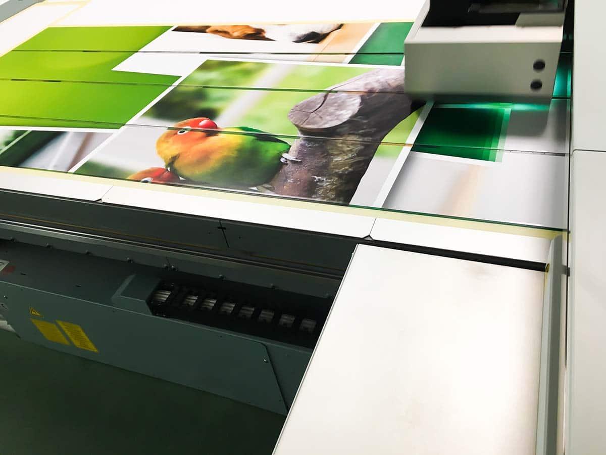 A nyomtató épp egy zöldes képet nyomtat üveglapra, amin sárgásvörös fejű, zöld papagájok látszanak.