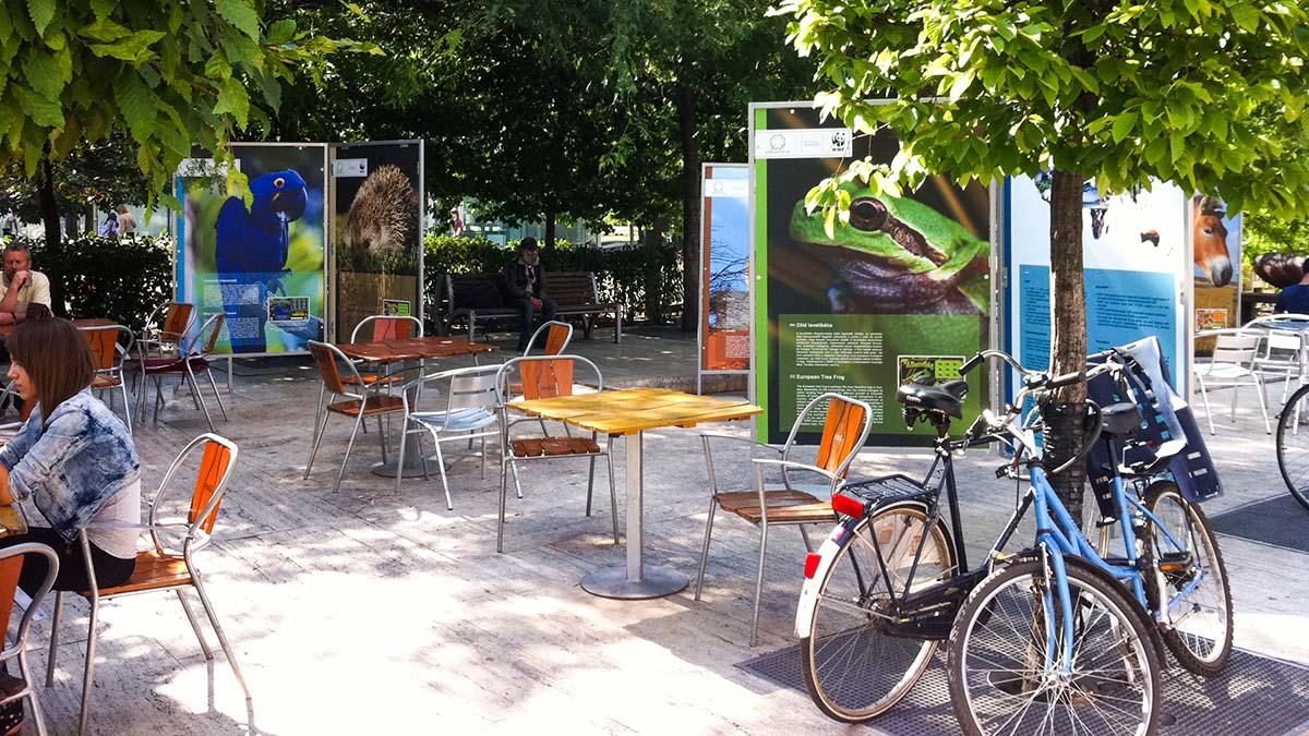 A Gödör előtt álló kis szögletes asztalok és székek látszanak a képen. Némelyiknél emberek üldögélnek és beszélgetnek. Az előtérben biciklik látszanak, hátul körben az embermagas színes WWF infótáblákból kialakított szigetek látszanak, amiken állatok (kék papagály, béka, sün stb.) képei, és a róluk szóló információk vannak.